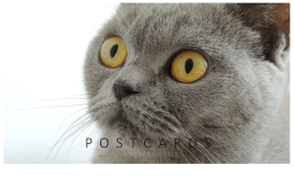 Minyatür Posta Kartları