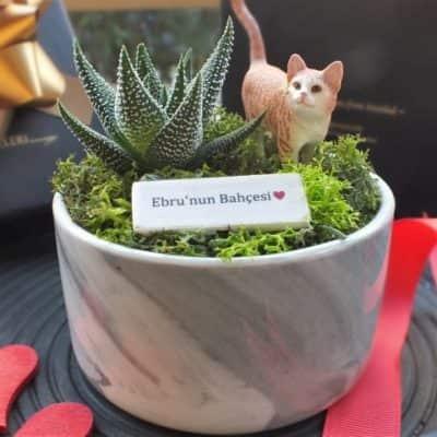 Kedi Isleri Ofisi - Marble