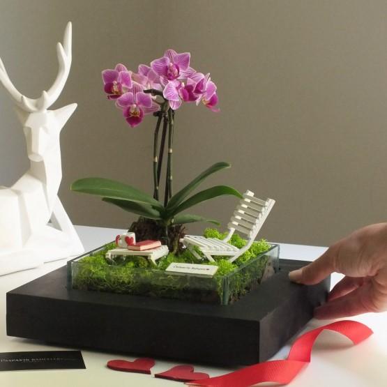 paspasin-bahceleri-minyatur-orkide-bahcesi-2