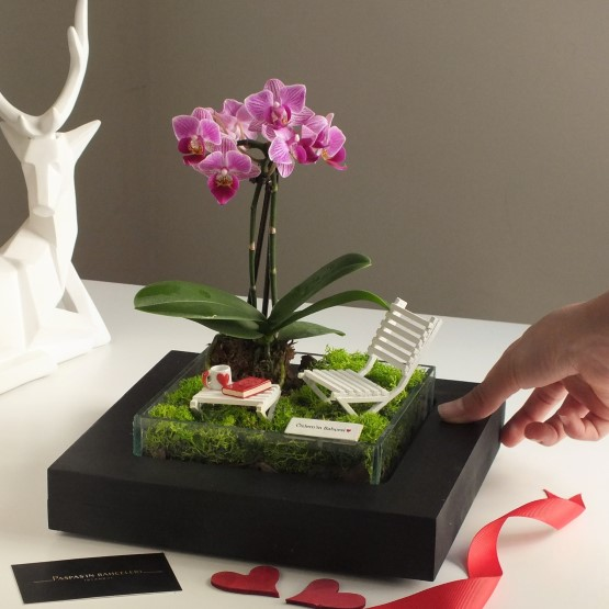 paspasin-bahceleri-minyatur-orkide-bahcesi-3