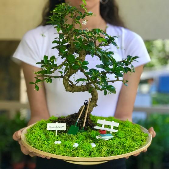 kiiye-zel-canm-babam-in-kupal-ve-kitapl-carmona-bonsaisi-2