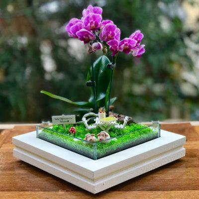 paspasin-bahceleri-orkide-koleksiyonu-teraryum-gretmenler-cin-6-3